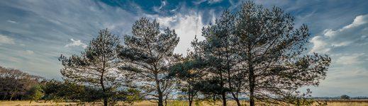 The Veluwe National Park