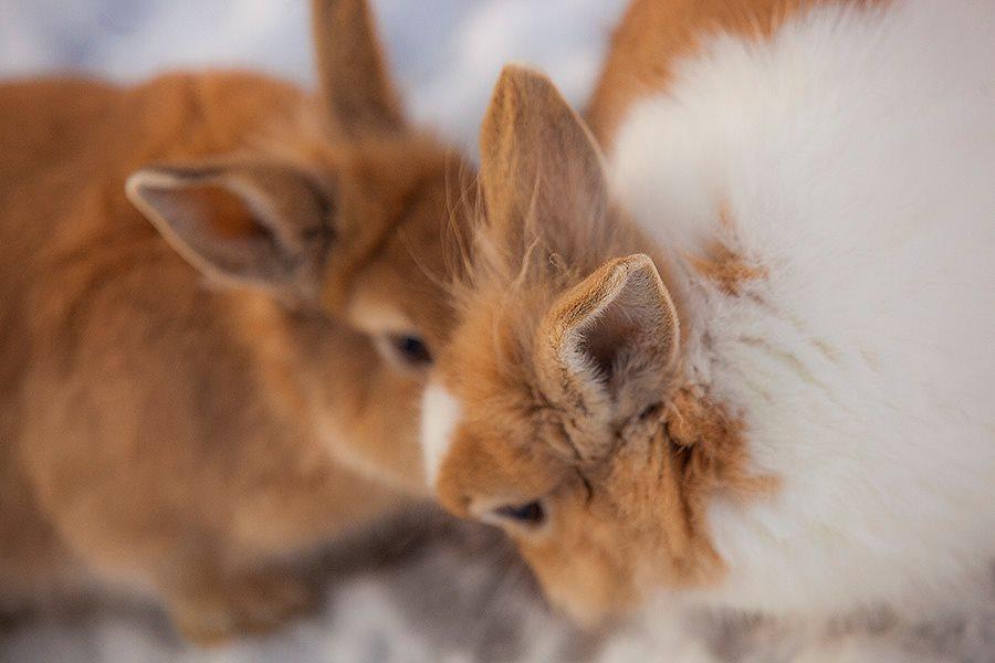 rabbit-01