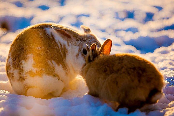 rabbit-05