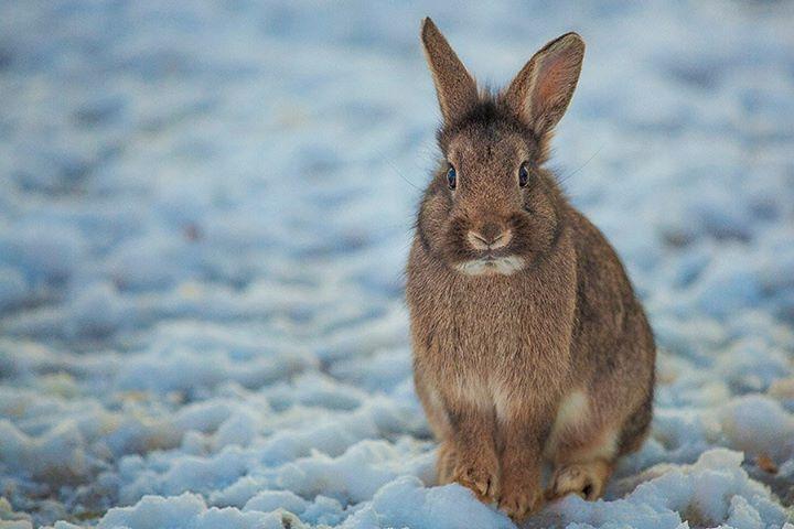 rabbit-07
