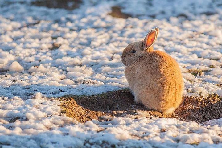 rabbit-02