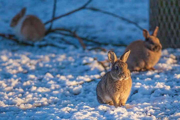 rabbit-03