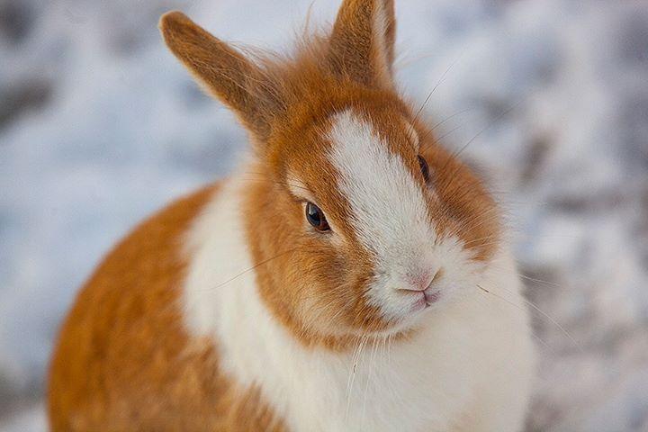 rabbit-08